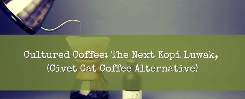 Civet Cat Coffee Alternative Cultured Coffee