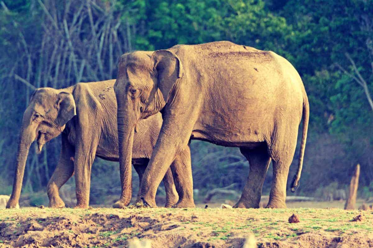 Elephants in Nagarhole National Park