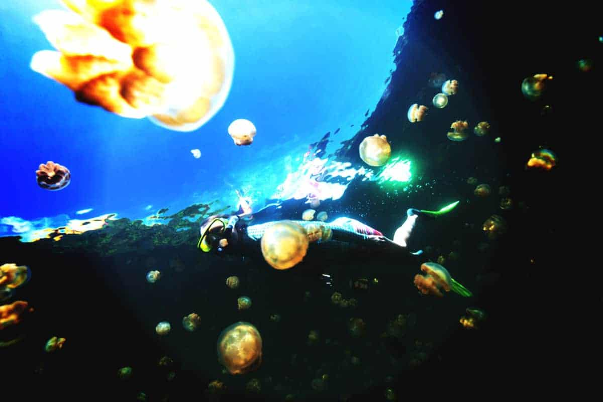 Snorkel with Jellyfish - Jellyfish Lake Pallau