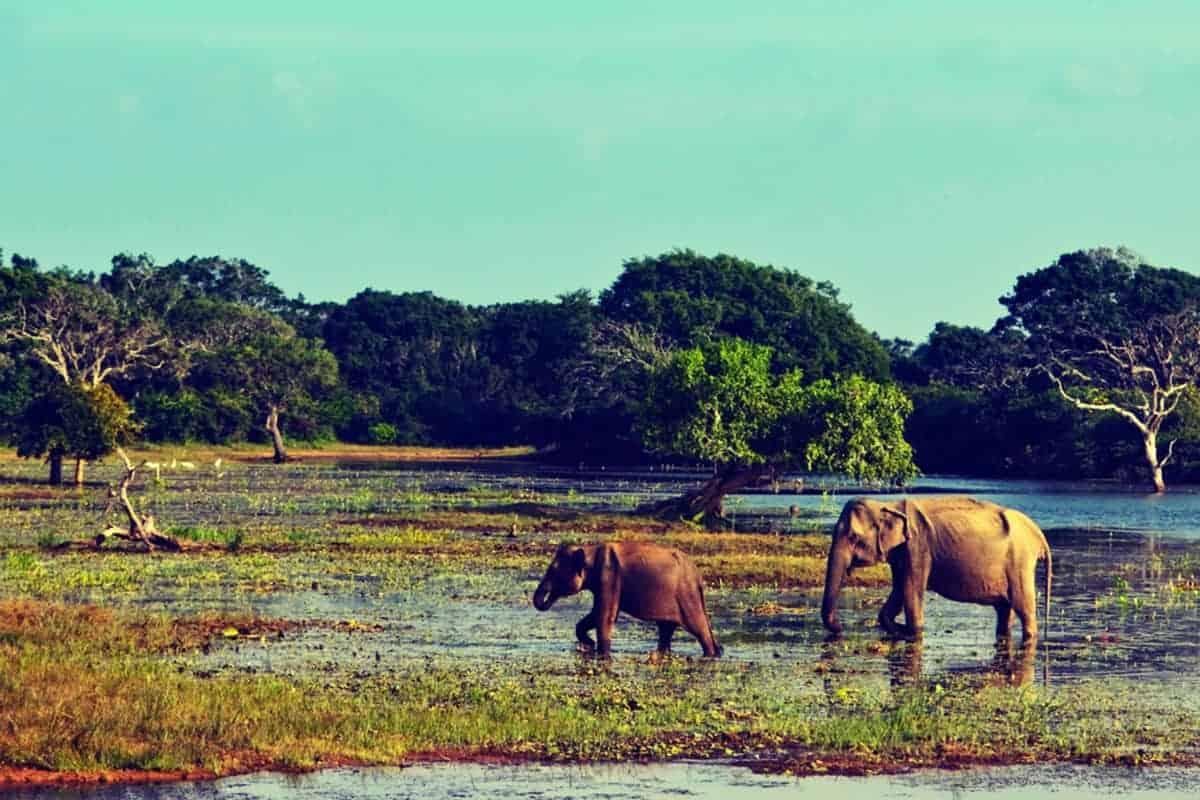 Wildlife in Yala National Park, Sri Lanka