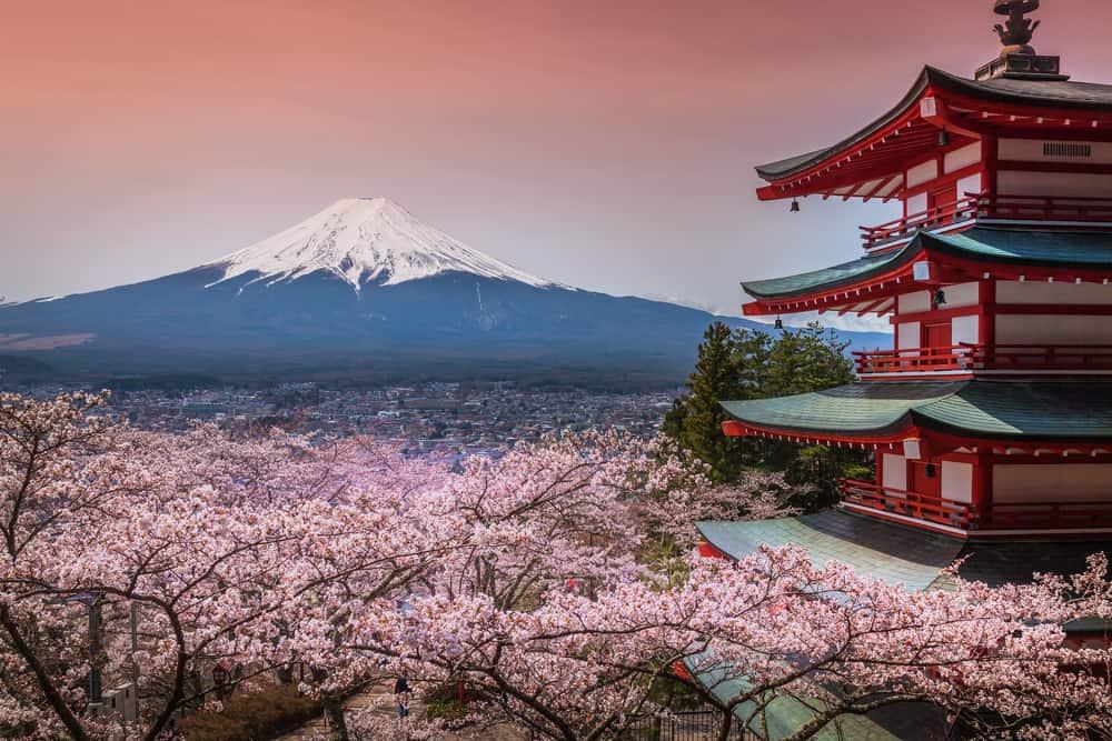Cherry Blossom Festival Tokyo